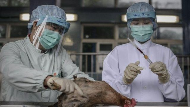 Le virus H5 a été détecté dans plusieurs élevages à travers le pays.