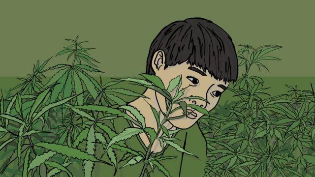 Joven vietnamita en una granja de cannabis.