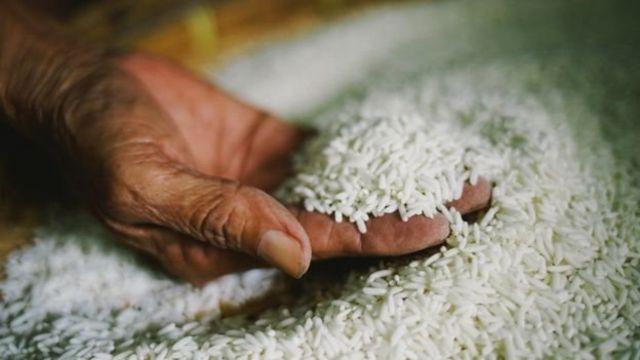 Mano con un puñado de granos de arroz