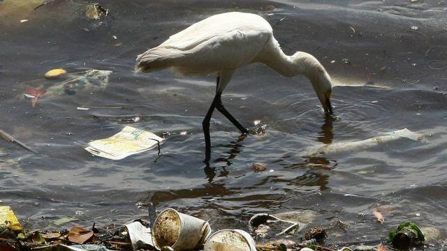 Imagem mostra ave procurando comida na água poluída com plástico