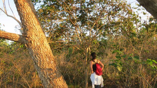 Árboles del género inga con otras especies plantadas en un proyecto de reforestación