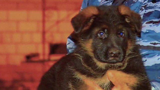 Puppy named Dobrynya