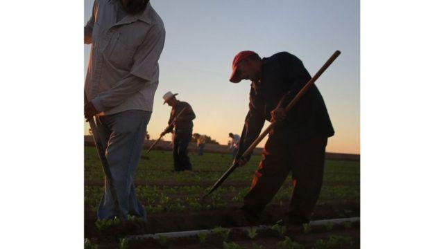 لماذا يتناقص عدد المزارعين حول العالم؟