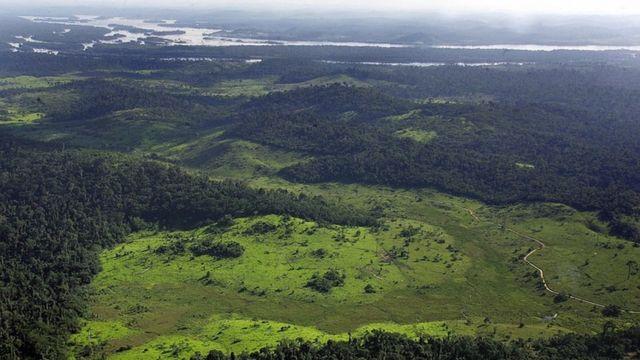 アマゾンは世界最大の熱帯林で南米大陸の約3分の1を占める