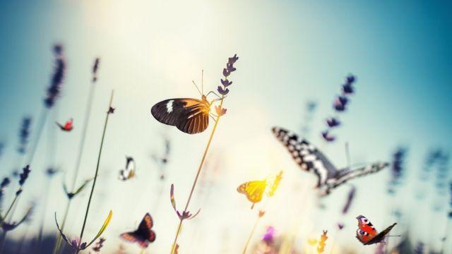 Borboleta pousa em galho de flor