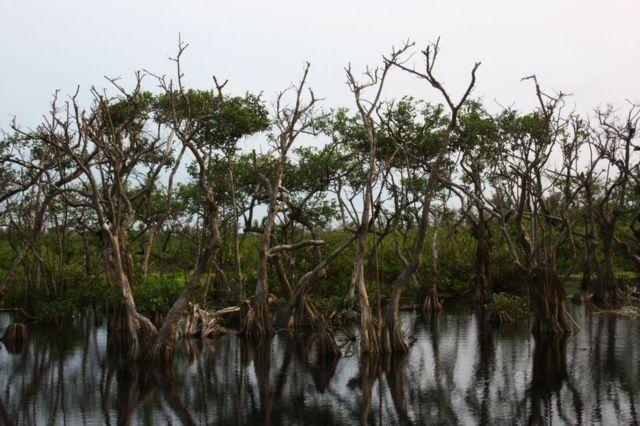 Árboles secos en Isla Portillo, Costa Rica.