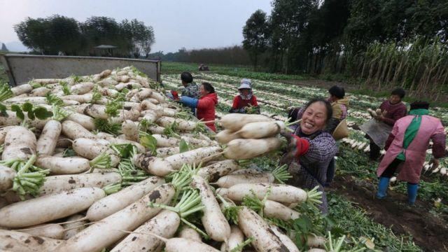 Campos de cultivos en China.