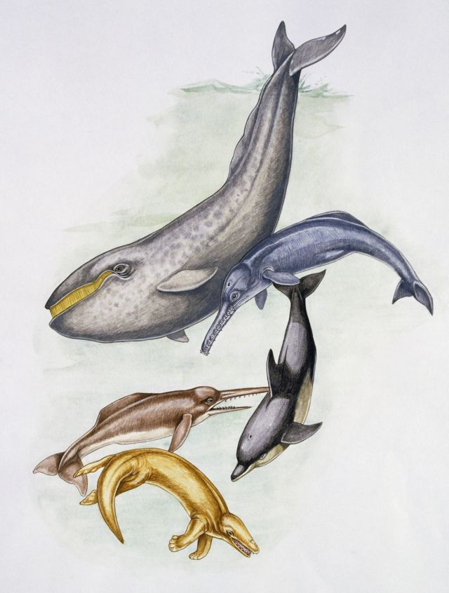 Доісторичні кити. Зверху - один з видів цетотеріїв
