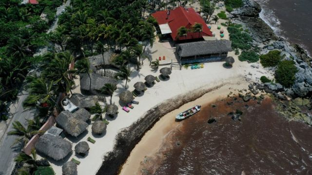 Mexico's top Caribbean beaches hit by seaweed infestation