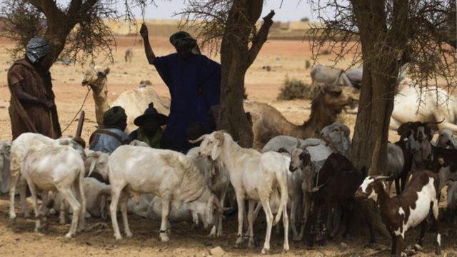 Les Bambaras, une ethnie d'agriculteurs, et les Peuls, des éleveurs, cohabitent dans la région de Mopti.