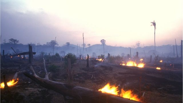 Trees burned to clear land in the Amazon rainforest.