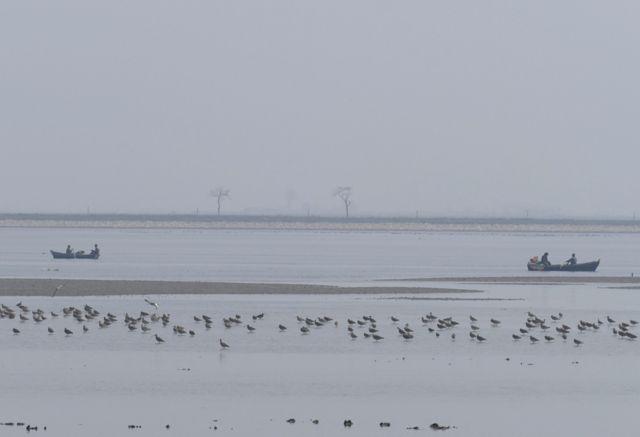 Aves migratorias en Corea del Norte