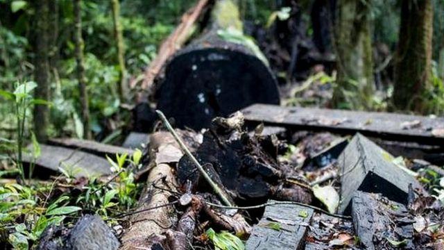 जंगलों का जीवन