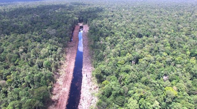 Manmade canal cuts into the peatland forest in Ketapang, West Kaliamantan