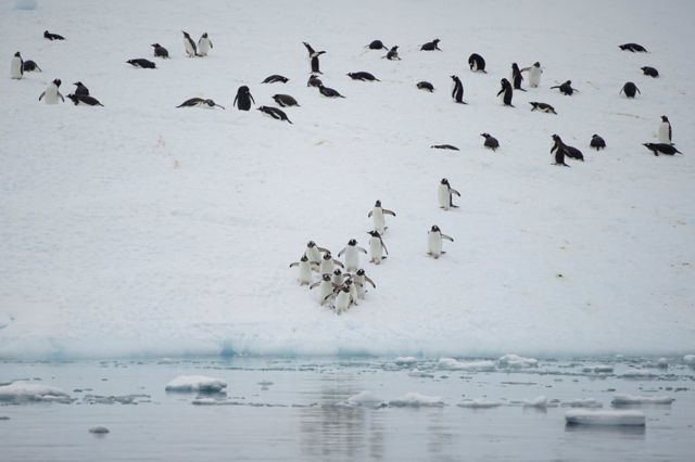 A group of penguins on ice