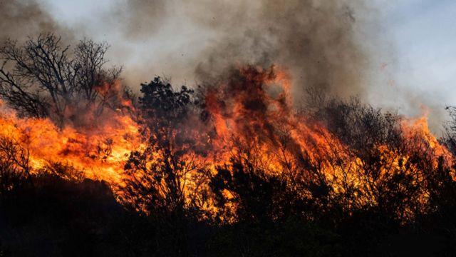 Un bosque se incendia en Córdoba