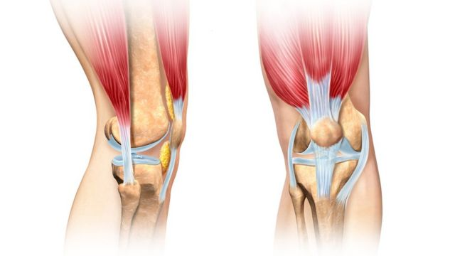 Anatomia dos joelhos