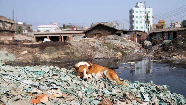 Кожевенные фабрики в Бангладеш печально известны огромным количеством производимых отходов