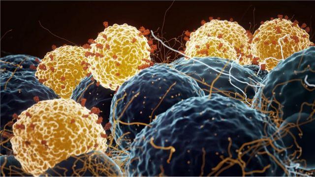 Un gráfico sobre virus y células