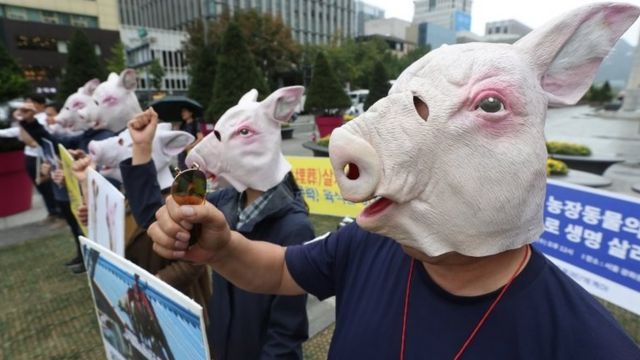 Animal rights activists in Seoul called for an end to the cull on Wednesday