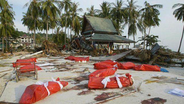 Bolsas con cadáveres en las islas Phi Phi.