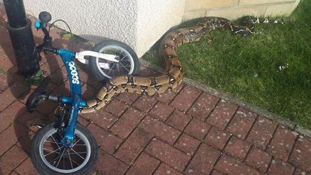 花园里的蟒蛇