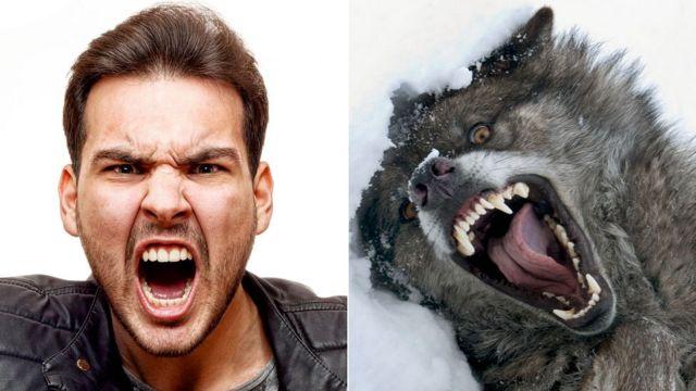 Hombre y lobo