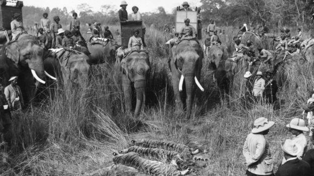 Охота на тигров во время королевского визита в Индию.