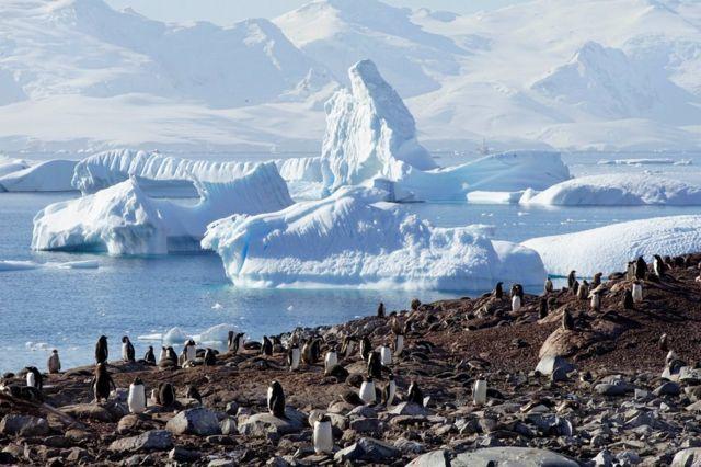 sahilde penguenler