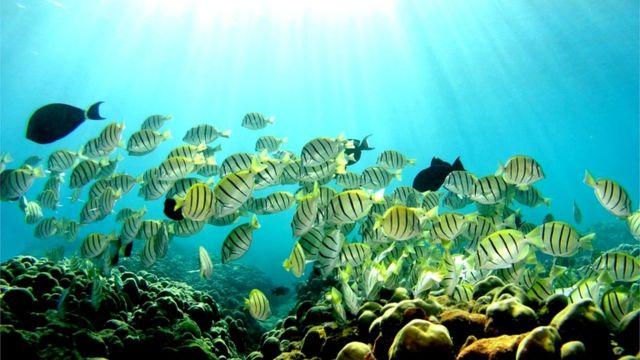 Peces en un coral en Hawái
