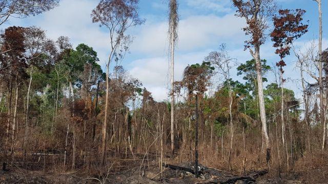 Uma floresta amazônica que foi queimada durante o El Niño de 2015