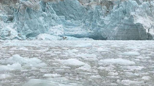 Hojas de hielo flotantes rodean el glaciar Pia en el estrecho de Magallanes.