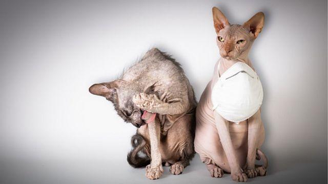 Кошки в масках