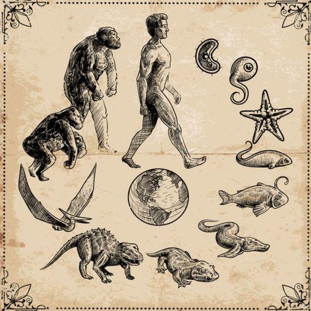 Qué es LUCA, el antepasado que dio origen a toda la vida en la Tierra (y  por qué quizás lo estamos buscando en el lugar equivocado) - BBC News Mundo