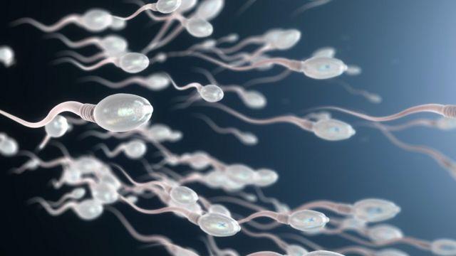 Espermatozóides