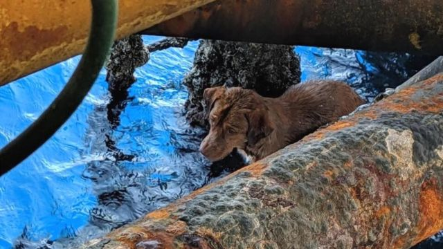 Dog rescued 220km from Thai coast by rig workers