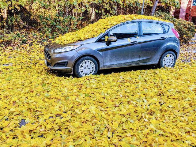 Car covered by leaves in Canada