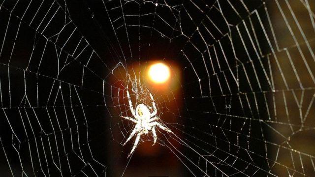 В процессе эволюции у нас развилось умение замечать в окружающей обстановке потенциально опасные объекты - например, пауков, которые могут быть ядовитыми