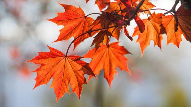 3 Razones Que Quizás Desconoces Por Las Que Vivir Cerca De Un árbol Es Bueno Para Tu Salud Bbc News Mundo