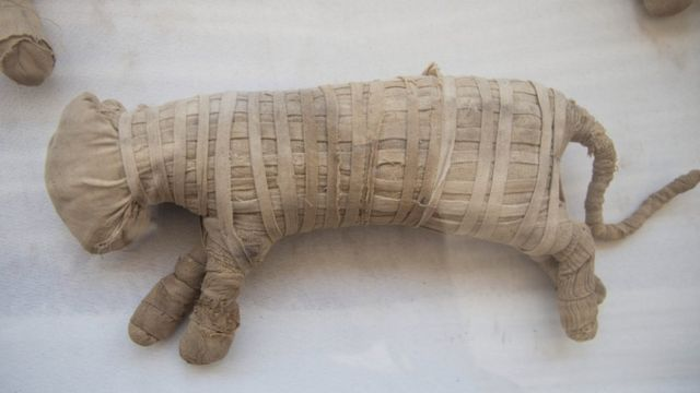La momia de un animal expuesta en Saqqara, al sur del Cairo.