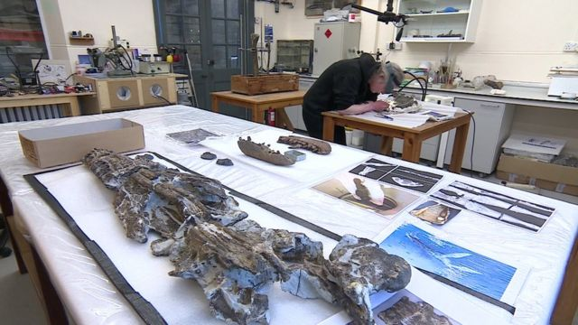 Limpeza do crânio do fóssil