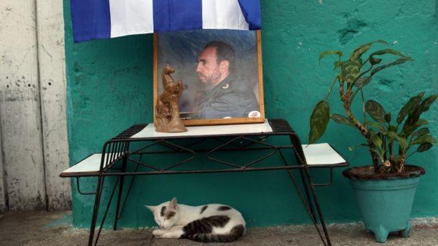 Küba lideri Fidel Castro'nun resminin altında uyuklayan bir kedi