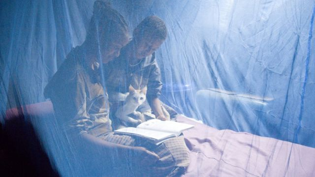 Two people reading inside a mosquito net with a cat