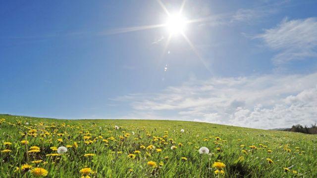 Sol sobre campo de girasoles.