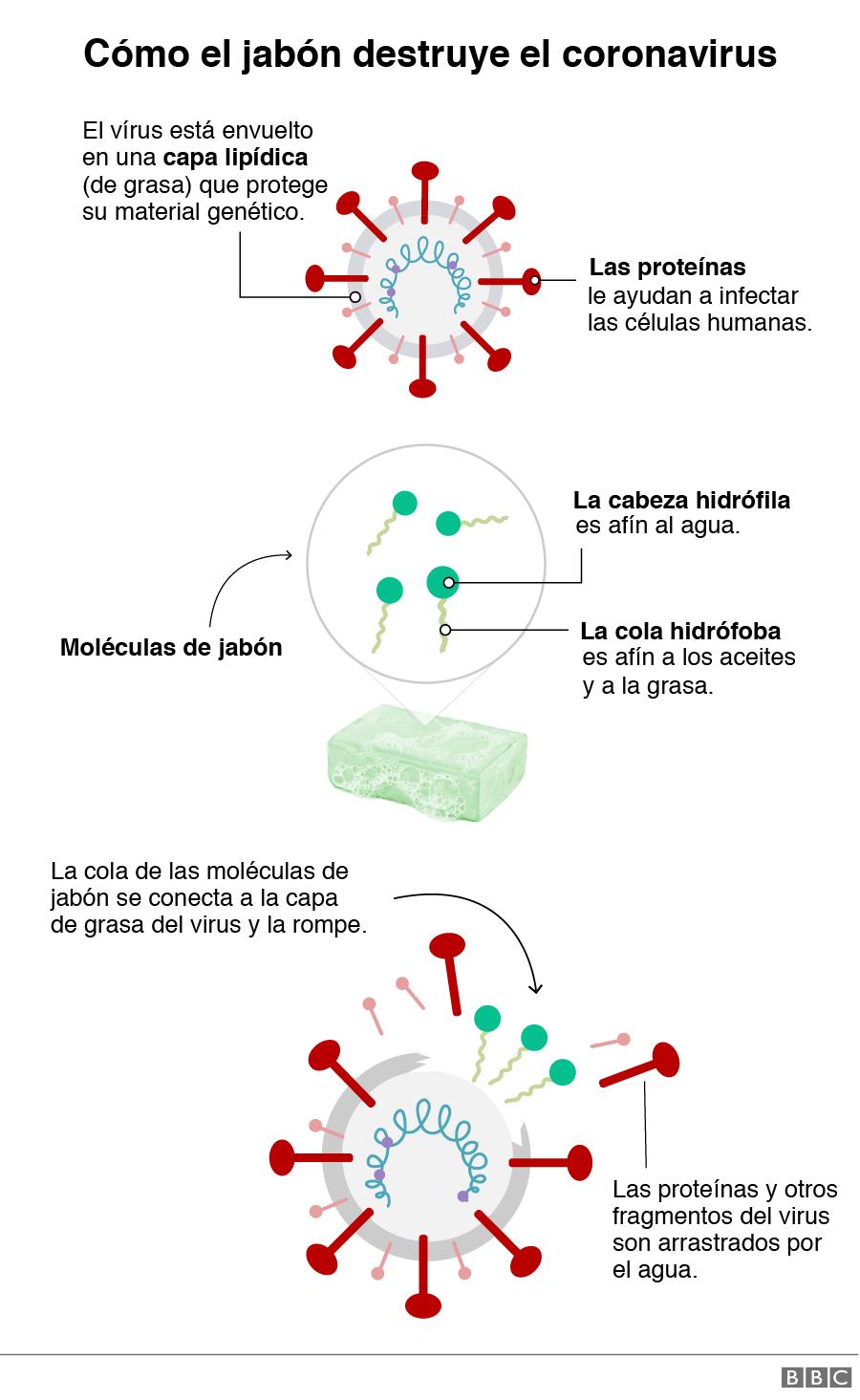 Gráfico mostrando cómo el jabón destruye el virus
