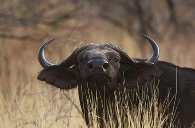 One of the Ethiopian peculiar wildlife