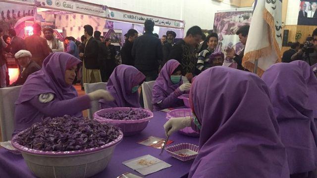 تصاویر جشنواره گل زعفران هرات