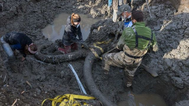 Michigan farmers discover woolly mammoth skeleton