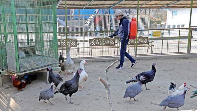 صورة موظف يعقم مزرعة للطيور