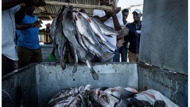 Des pêcheurs kenyans stockant du poisson pêché dans les eaux du Nil.